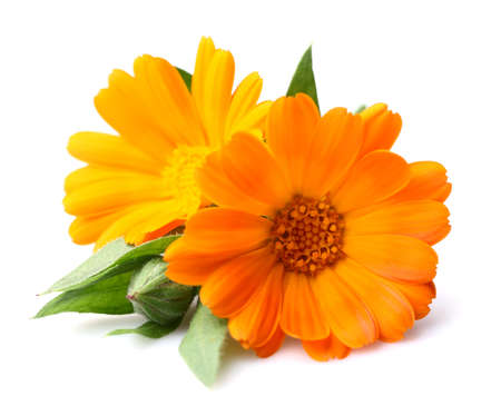 Beauty goudsbloem