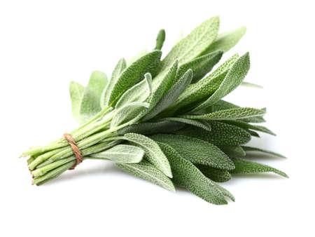 白い背景にセージの植物