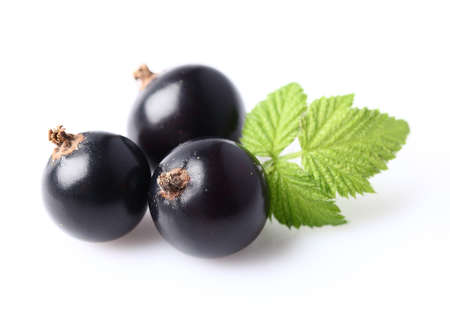 Ripe blackcurrant with leaf Stock Photo