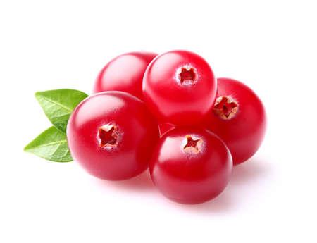 cranberry: Cranberry in closeup
