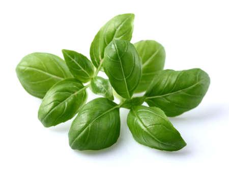 Basil leaves in closeup Zdjęcie Seryjne