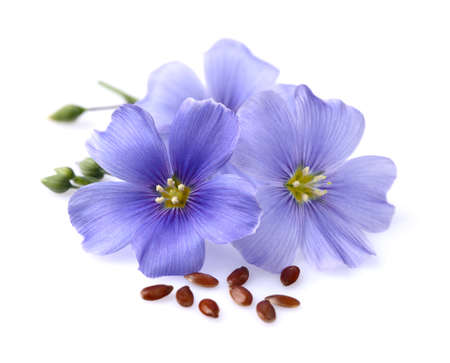 Flax flowers with seeds photo