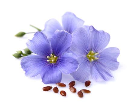 Vlas bloemen met zaden