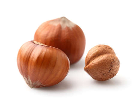 filbert: Filbert nuts
