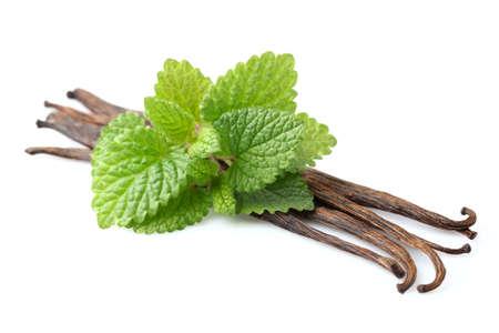 melissa: Vanilla with melissa Stock Photo