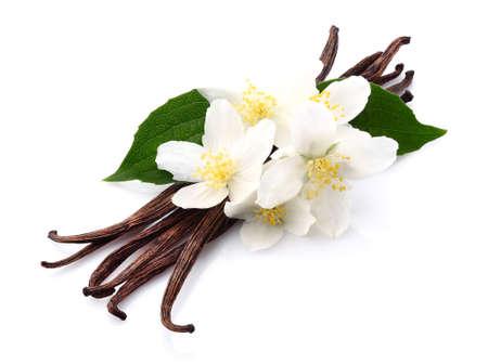 bean pod: Vanilla with jasmine Stock Photo