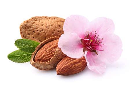 アーモンドの花 写真素材