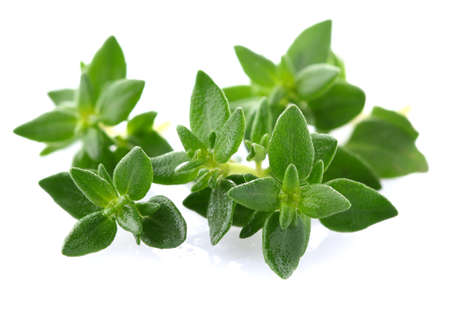 thyme: Thyme herbs