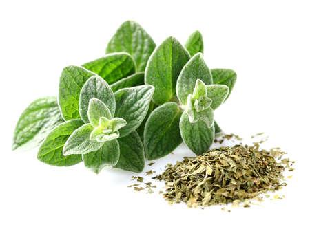 green herbs: Oregano.Fresh and dry Stock Photo