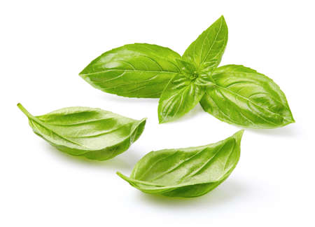 basil: Basil leaves