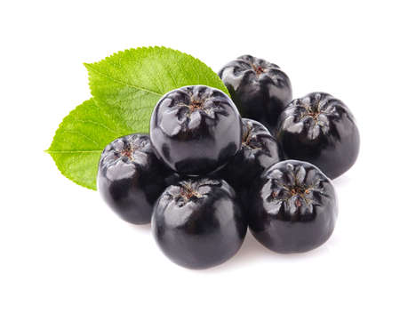 plant antioxidants: Chokeberry with leaves Stock Photo