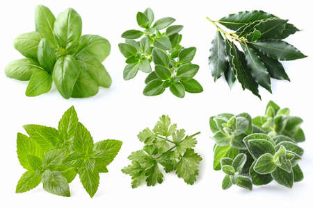 basil: Spices collage