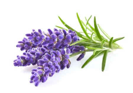 Lavendelbloemen Stockfoto