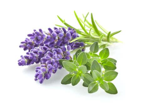 Lavender met tijm Stockfoto