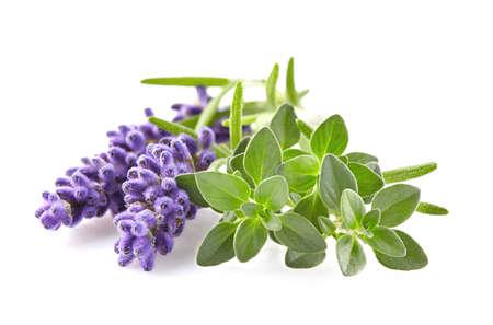 Lavender met tijm kruiden Stockfoto