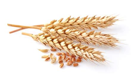 Wheat spikes 스톡 콘텐츠