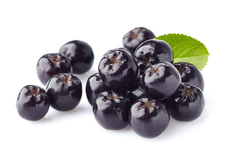 plant antioxidants: Chokeberry. Berries for health Stock Photo