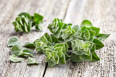 oregano plant: Oregano spices
