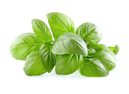 basil: Basil leaves on a white background