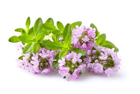 Thyme flowers in closeup Фото со стока