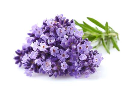 Lavender flowers in closeup Foto de archivo