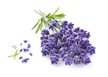 Lavender flowers in closeup Stockfoto
