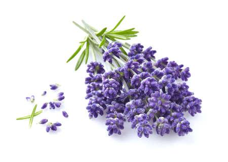 Lavender flowers in closeup Standard-Bild