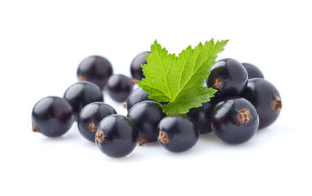 blackcurrant: Blackcurrant berries with leaves