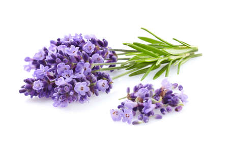 Lavender plant on a white background