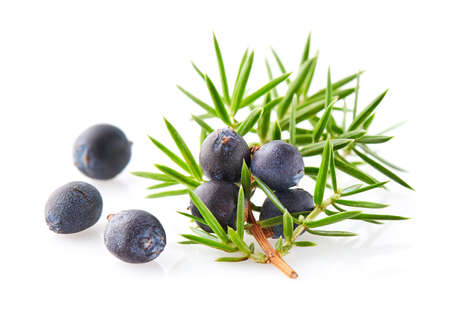 Juniper berries on a white background Zdjęcie Seryjne