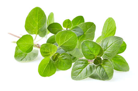 Oregano spices isolated on a white background