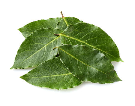 Laurel bay leaves isolated on a white background