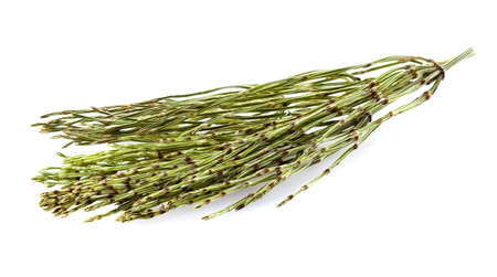 Dry horsetail on a white background