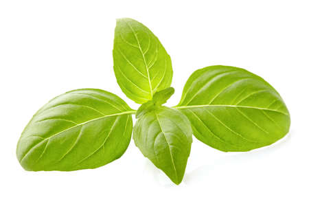 Basil leaves in closeup Banco de Imagens