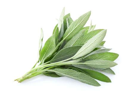Sage leaves on white background Zdjęcie Seryjne - 99847236