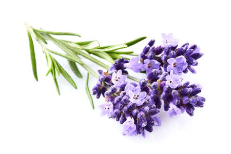 Lavender flowers on white background Stock fotó - 99910546