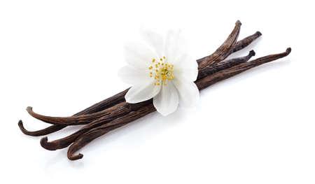 Jasmine with vanilla in closeup 스톡 콘텐츠