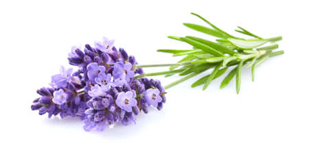 Lavender flowers in closeup Stok Fotoğraf