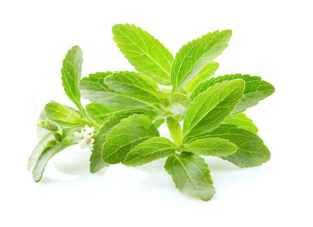 Stevia rebaudiana on white background