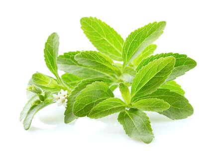 Stevia rebaudiana on white background Stockfoto