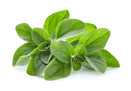 Marjoram spice in closeup Banque d'images - 101233547