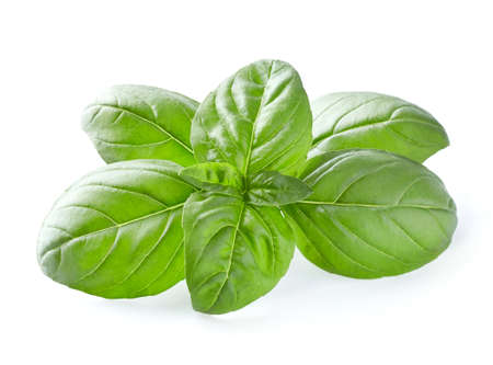 Basil leaves in closeup on white background
