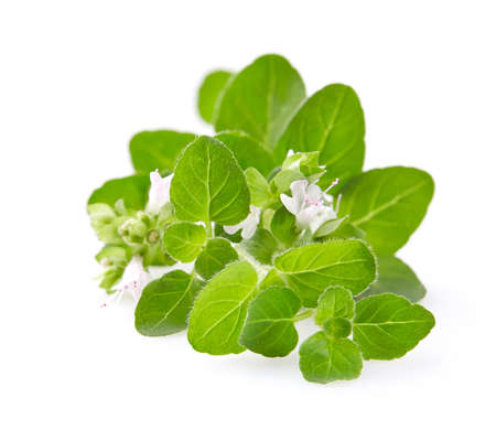 Oregano flowers on white background