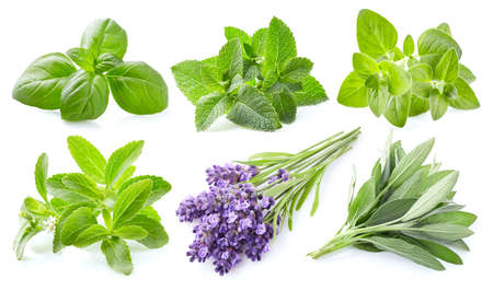 Collection of fresh herbs on white background Stock fotó - 107294829