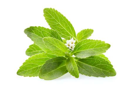 Foglie di stevia su sfondo bianco