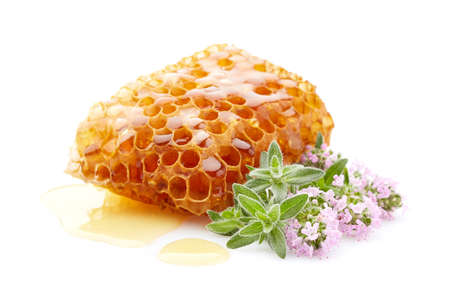 Honeycomb with thyme plant Thyme honey on white background