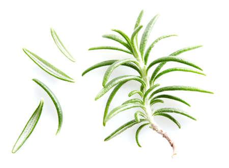 Rosemary leaves on white background Banco de Imagens
