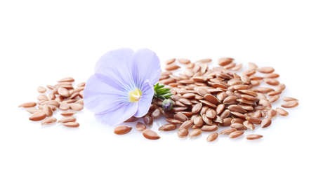 Flax flower with seeds on white background