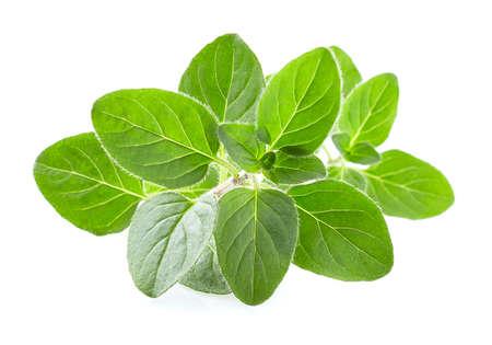 Oregano leaves on white background Stock Photo