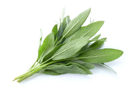 Sage leaves in closeup on white background